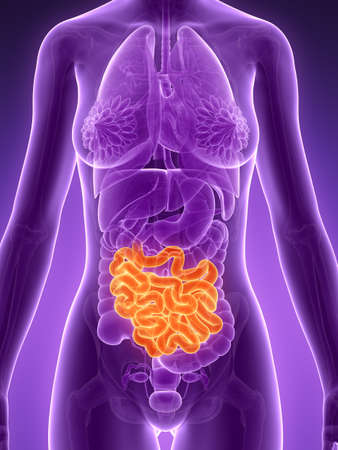 3d rendered illustration - small intestine Stock Illustration - 18071489