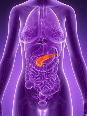 3d rendered illustration - pancreas Stock Illustration - 18071481