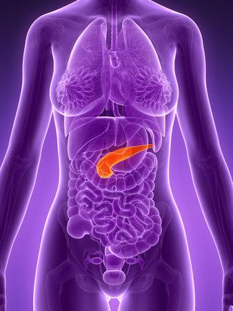 pancreatitis: 3d rendered illustration - pancreas Stock Photo