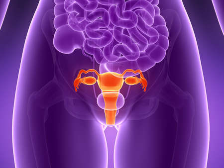 3d rendered illustration - uterus Stock Illustration - 18071167