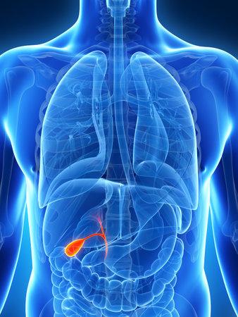 3d rendered illustration of the male gallbladder Stock Photo
