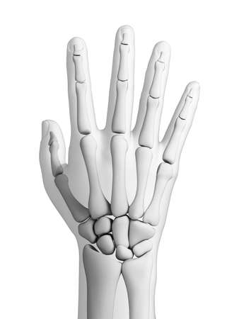 wrist joint: 3d rendered illustration - hand