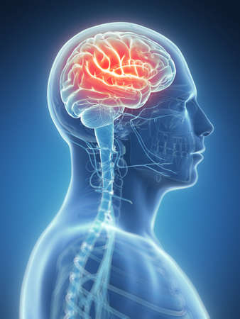 cerebral cortex: 3d rendered illustration - headache