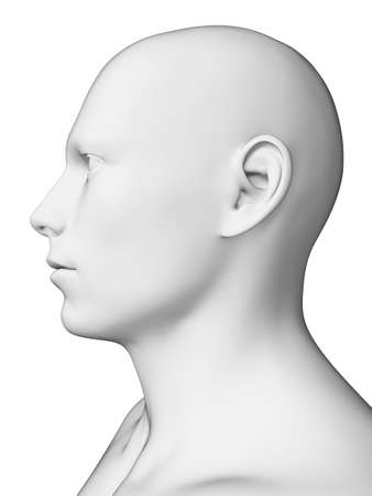 3d rendered illustration - white male head illustration