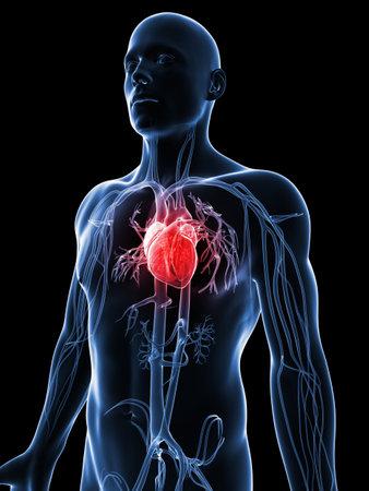 enfermedades del corazon: 3d rindi� la ilustraci�n del sistema vascular humano