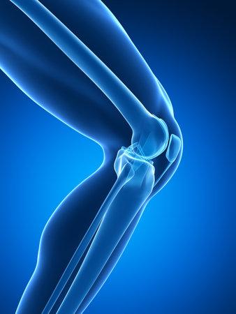 articulaciones: 3d rindi� la ilustraci�n - anatom�a de la rodilla