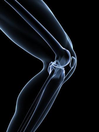 de rodillas: 3d rindió la ilustración - Anatomía de una rodilla