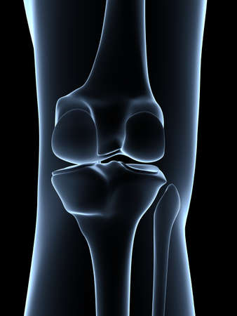 collateral: 3d rendered illustration - knee anatomy
