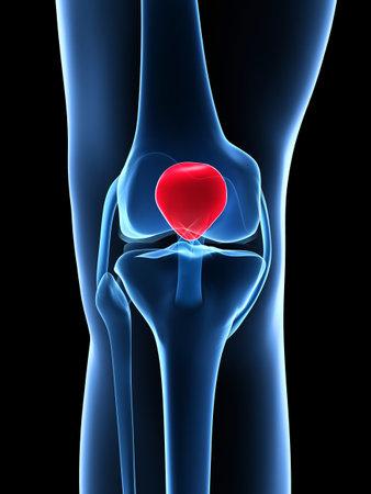 shin bone: 3d rendered illustration - knee anatomy