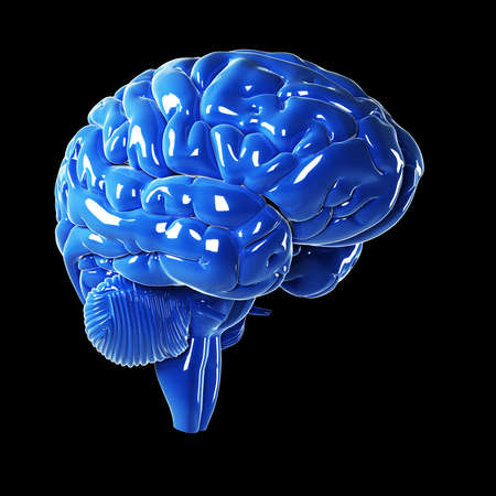cerebra: 3d rendered illustration - glossy blue brain Stock Photo
