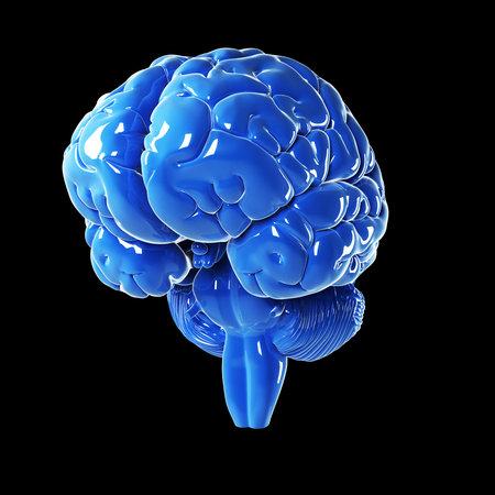 cerebral cortex: 3d rendered illustration - glossy blue brain Stock Photo