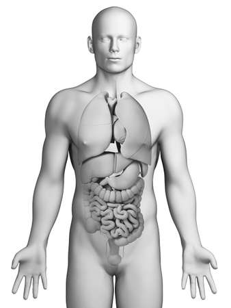 3d rendered illustration - male organs Stock Illustration - 18070712