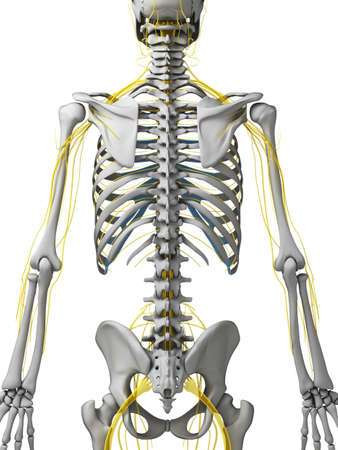 3d rendered illustration - nerves Stock Illustration - 18071285