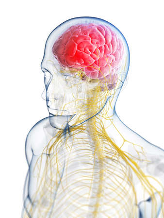 3d rendered illustration of the head - headache Stock Photo