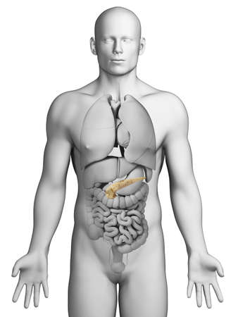 dissection: 3d rendered illustration - pancreas Stock Photo