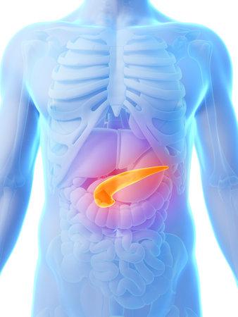 sistema digestivo: 3d rindi� la ilustraci�n - p�ncreas Foto de archivo