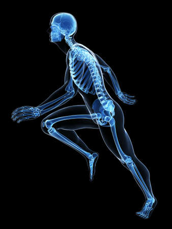physiology: 3d rendered illustration - runner anatomy Stock Photo