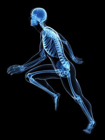 huesos humanos: 3d rindi� la ilustraci�n - Anatom�a corredor Foto de archivo