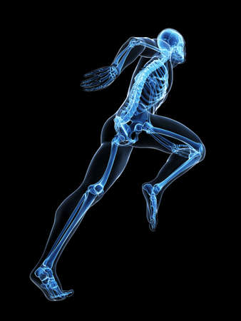 athlete: 3d rendered illustration - runner anatomy Stock Photo
