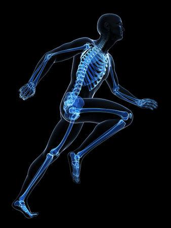 human bone: 3d rendered illustration - runner anatomy Stock Photo