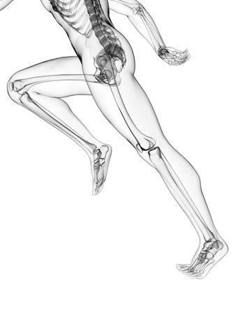 3d rendered illustration - runner anatomy Stock Illustration - 18070758