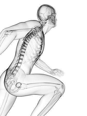esqueleto humano: 3d rindió la ilustración - Anatomía corredor Foto de archivo
