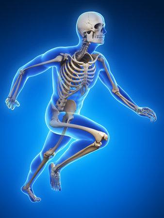 esqueleto humano: 3d rindi� la ilustraci�n - Anatom�a corredor Foto de archivo