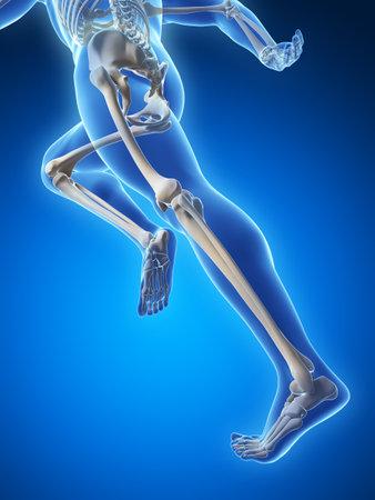 3d rendered illustration - runner anatomy Stock Illustration - 18071199