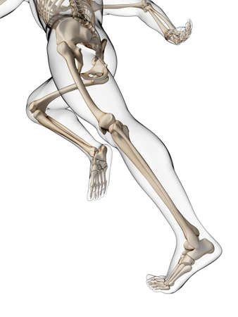 3d rendered illustration - runner anatomy illustration