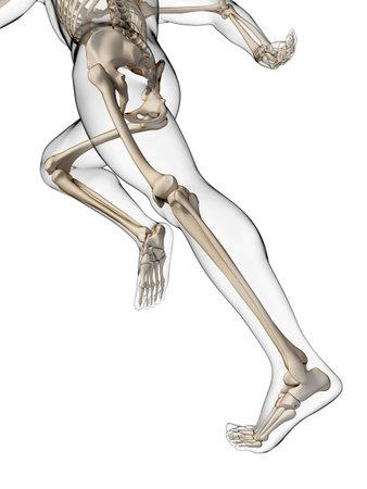 3d rendered illustration - runner anatomy Stock Photo