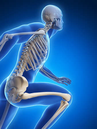 human bones: 3d rendered illustration - runner anatomy Stock Photo