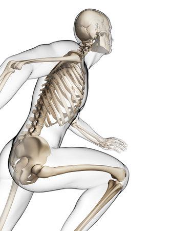 3d rendered illustration - runner anatomy Stock Illustration - 18071025