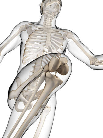 cartilage: 3d rendered illustration - runner anatomy Stock Photo