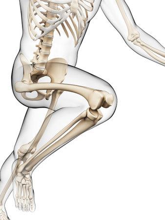 x ray skeleton: 3d rendered illustration - runner anatomy Stock Photo