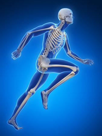 cartilage: 3d rendered illustration - runner anatomy Stock Photo