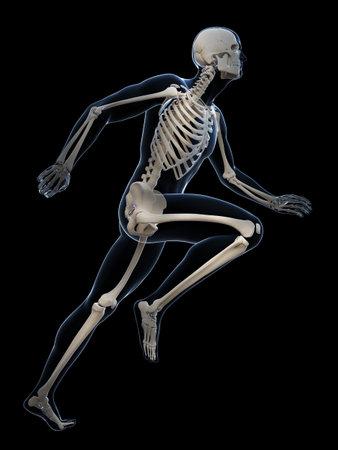 3d rendered illustration - runner anatomy Stock Illustration - 18070731