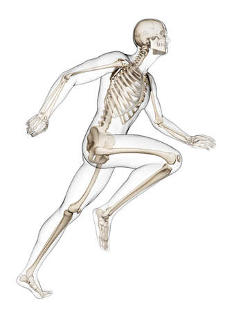 skeleton x ray: 3d rendered illustration - runner anatomy Stock Photo