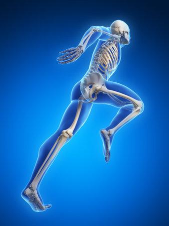 huesos: 3d rindi� la ilustraci�n - Anatom�a corredor Foto de archivo