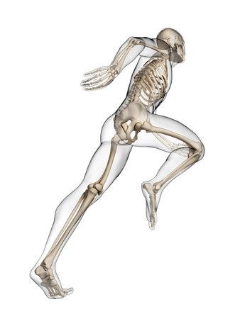 healthy body: 3d rendered illustration - runner anatomy Stock Photo