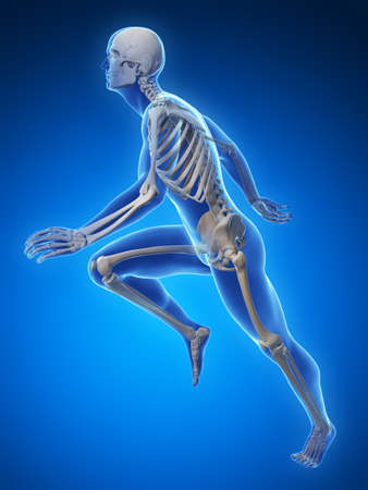 3d rendered illustration - runner anatomy Stock Illustration - 18071075