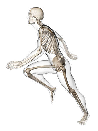 3d rendered illustration - runner anatomy Stock Illustration - 18070701