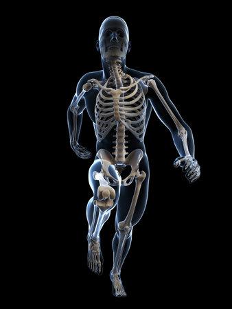 huesos humanos: 3d rindió la ilustración - Anatomía corredor Foto de archivo