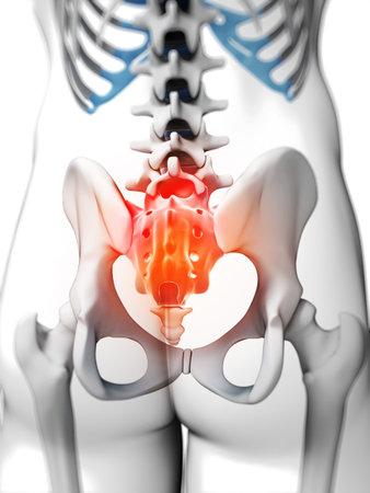 coccyx pain: 3d rendered illustration - sacrum