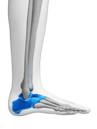 huesos humanos: Ilustración 3d rendered - huesos del tarso Foto de archivo
