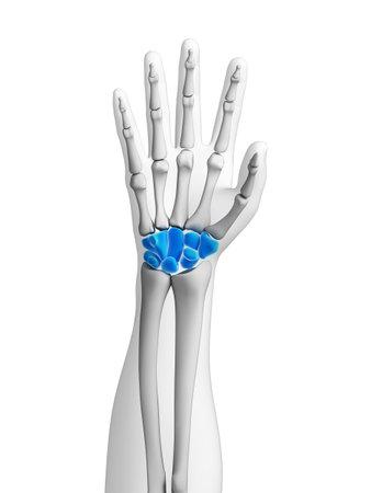 distal: 3d rindió la ilustración - huesos de la mano