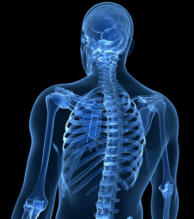 x ray: 3d rendered illustration of the male skeleton Stock Photo