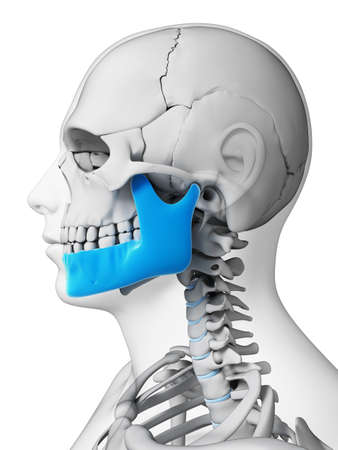 jaw: 3d rendered illustration - jaw bone Stock Photo