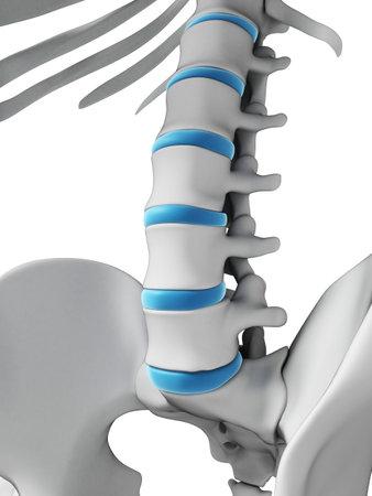 esqueleto: Ilustraci�n 3d rendered - columna vertebral humana Foto de archivo