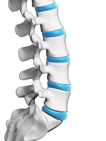 columna vertebral: Ilustración 3d rendered - columna vertebral humana Foto de archivo