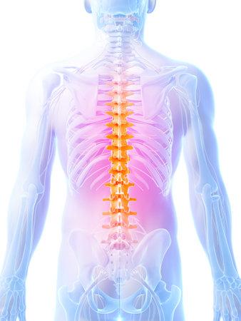 dorsal: 3d rendered illustration - human spine
